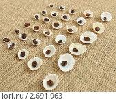 Кофейные зерна на ракушках. Стоковое фото, фотограф Денис Кошель / Фотобанк Лори