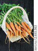 Купить «Морковь в корзине», фото № 2693563, снято 18 июля 2011 г. (c) Светлана Зарецкая / Фотобанк Лори