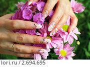 Купить «Женские руки с  маникюром и цветы хризантемы», фото № 2694695, снято 28 июня 2011 г. (c) Татьяна Белова / Фотобанк Лори