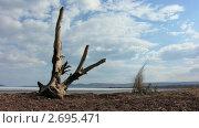 Купить «Корень большого дерева на берегу. Таймлапс.», видеоролик № 2695471, снято 23 мая 2010 г. (c) Юрий Пономарёв / Фотобанк Лори