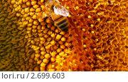 Купить «Пчелы ползают  по подсолнуху», видеоролик № 2699603, снято 20 июля 2011 г. (c) Михаил Коханчиков / Фотобанк Лори