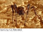 Большой паук крупым планом. Стоковое фото, фотограф Igor Sidorenko / Фотобанк Лори