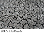 Купить «Растрескавшаяся земля», эксклюзивное фото № 2709227, снято 12 июня 2011 г. (c) Александра Меланич / Фотобанк Лори