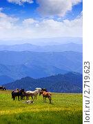 Купить «Табун лошадей в горах. Алтай», фото № 2719623, снято 17 июля 2011 г. (c) Яков Филимонов / Фотобанк Лори