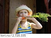 Купить «Малыш грызет морковку», фото № 2720335, снято 14 августа 2011 г. (c) Оксана Лычева / Фотобанк Лори