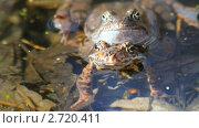 Лягушки в пруду. Стоковое видео, видеограф Алексас Кведорас / Фотобанк Лори