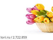 Купить «Букет искусственных тюльпанов на белом фоне», фото № 2722859, снято 25 августа 2010 г. (c) Elnur / Фотобанк Лори