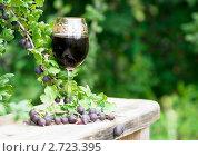 Купить «Бокал домашнего вина из черного крыжовника», фото № 2723395, снято 6 августа 2011 г. (c) Макарова Елена / Фотобанк Лори