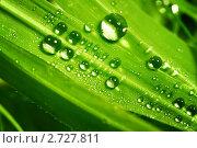 Купить «Зеленый лист с каплями воды», фото № 2727811, снято 23 апреля 2009 г. (c) Иван Михайлов / Фотобанк Лори
