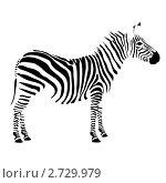 Зебра. Стоковая иллюстрация, иллюстратор Тамара Григолава / Фотобанк Лори
