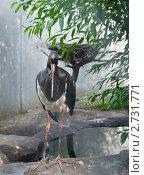 Аист. Стоковое фото, фотограф Яна Матвеева / Фотобанк Лори