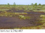 Купить «Непроходимое болото», эксклюзивное фото № 2742487, снято 1 июля 2011 г. (c) Наталия Шевченко / Фотобанк Лори