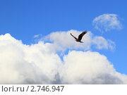 Купить «Коршун парит в небе Горного Алтая на фоне кучевых облаков», эксклюзивное фото № 2746947, снято 24 июля 2011 г. (c) Григорий Писоцкий / Фотобанк Лори