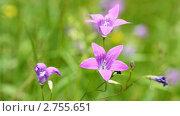 Купить «Цветы», видеоролик № 2755651, снято 22 июня 2011 г. (c) Алексас Кведорас / Фотобанк Лори