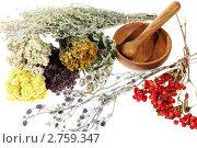 Купить «Лекарственные травы на белом фоне», фото № 2759347, снято 27 августа 2011 г. (c) Артем Поваров / Фотобанк Лори