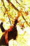 Девушка в парке раскидывает осенние листья, фото № 2763551, снято 6 октября 2010 г. (c) Иван Михайлов / Фотобанк Лори