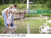Купить «Семья у пруда с лебедями», фото № 2778255, снято 13 августа 2011 г. (c) Raev Denis / Фотобанк Лори