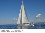 Купить «Яхта Scorpius на траверзе побережья Сочи», фото № 2780827, снято 7 сентября 2011 г. (c) Анна Мартынова / Фотобанк Лори