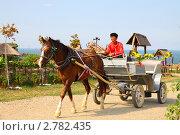 Купить «Лошадь и казак в повозке. Атамань», эксклюзивное фото № 2782435, снято 21 августа 2011 г. (c) Дорощенко Элла / Фотобанк Лори