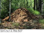 Муравейник в лесу. Стоковое фото, фотограф Геннадий чупругин / Фотобанк Лори
