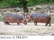 Купить «Два бегемота в вольере», фото № 2784471, снято 25 августа 2011 г. (c) Ольга Липунова / Фотобанк Лори