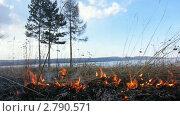Купить «Пожар в лесу. Горит сухая трава.», видеоролик № 2790571, снято 6 ноября 2010 г. (c) Юрий Пономарёв / Фотобанк Лори