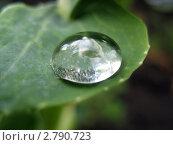 Купить «Капля воды на зеленом листе. Макро», фото № 2790723, снято 22 августа 2009 г. (c) Светлана Ильева (Иванова) / Фотобанк Лори