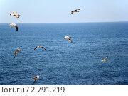 Чайки на фоне моря. Стоковое фото, фотограф Екатерина Усынина / Фотобанк Лори