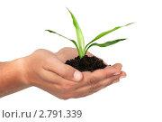 Зеленый росток в мужских руках. Стоковое фото, фотограф Marina Appel / Фотобанк Лори