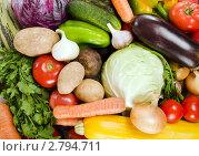 Купить «Натюрморт из свежих овощей», фото № 2794711, снято 11 сентября 2011 г. (c) Воронин Владимир Сергеевич / Фотобанк Лори