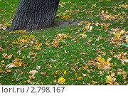 Купить «Осень, опавшие желтые листья на зеленой траве», фото № 2798167, снято 15 сентября 2011 г. (c) Dmitry S. Marshavin / Фотобанк Лори