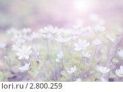 Цветы. Стоковое фото, фотограф Арсёнова Галина / Фотобанк Лори