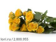 Букет желтых роз на белом фоне. Стоковое фото, фотограф Елена Блохина / Фотобанк Лори