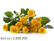 Букет желтых роз. Стоковое фото, фотограф Елена Блохина / Фотобанк Лори