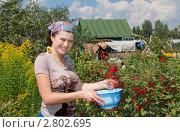 Купить «Улыбающаяся девушка в саду», фото № 2802695, снято 19 января 2019 г. (c) Ирина Карлова / Фотобанк Лори