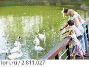 Купить «Семья у пруда с лебедями», фото № 2811027, снято 13 августа 2011 г. (c) Raev Denis / Фотобанк Лори