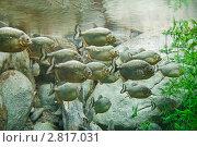 Купить «Рыбы», фото № 2817031, снято 15 сентября 2011 г. (c) Parmenov Pavel / Фотобанк Лори