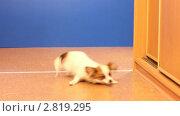 Купить «Бегающие собаки», видеоролик № 2819295, снято 25 сентября 2011 г. (c) Сергей Лаврентьев / Фотобанк Лори