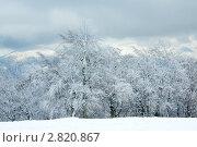 Купить «Заснеженные деревья в горах», фото № 2820867, снято 22 октября 2010 г. (c) Юрий Брыкайло / Фотобанк Лори