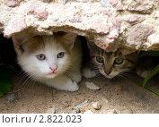 Купить «Два котенка выглядывают из укрытия», фото № 2822023, снято 7 июля 2011 г. (c) Вячеслав Палес / Фотобанк Лори