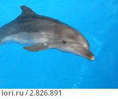 Дельфин в голубой воде. Стоковое фото, фотограф Евгения Шийка / Фотобанк Лори
