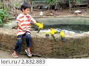 Купить «Мальчик и попугаи», фото № 2832883, снято 12 ноября 2010 г. (c) Хайрятдинов Ринат / Фотобанк Лори