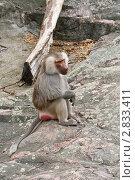 Купить «Обезьяна, сидящая на камне», фото № 2833411, снято 17 сентября 2011 г. (c) Юлия Бабкина / Фотобанк Лори
