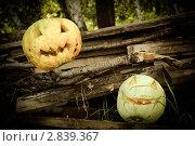 Тыквы. Стоковое фото, фотограф Алёна Новожилова / Фотобанк Лори