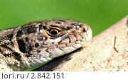 Взгляд рептилии. Стоковое видео, видеограф Андрей Ежов / Фотобанк Лори