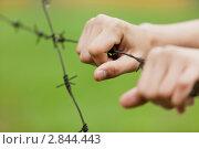 Колючая проволока. Стоковое фото, фотограф Нилов Сергей / Фотобанк Лори