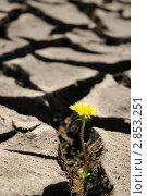 Купить «Растрескавшаяся земля», фото № 2853251, снято 9 мая 2010 г. (c) Светлана Полушкина / Фотобанк Лори