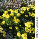 Цветы как фон. Стоковое фото, фотограф Кашкарева Светлана / Фотобанк Лори