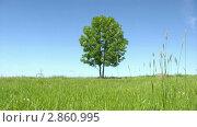 Купить «Одинокое дерево», видеоролик № 2860995, снято 27 марта 2010 г. (c) Андрей Ежов / Фотобанк Лори