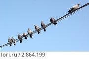 Купить «Голуби на проводах», фото № 2864199, снято 11 октября 2011 г. (c) Насыров Руслан / Фотобанк Лори
